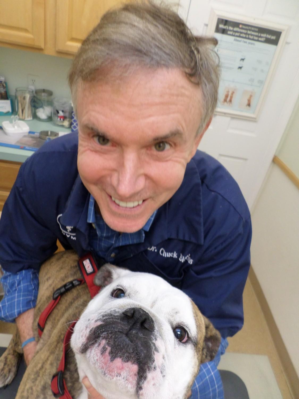 Oakton-Vienna Veterinary Hospital - Vienna, VA - Dr. Blevins
